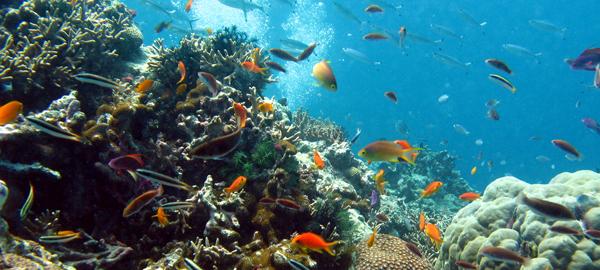 Australia no incluye la Gran Barrera de Coral en su informe a la UNESCO sobre turismo y cambio climático