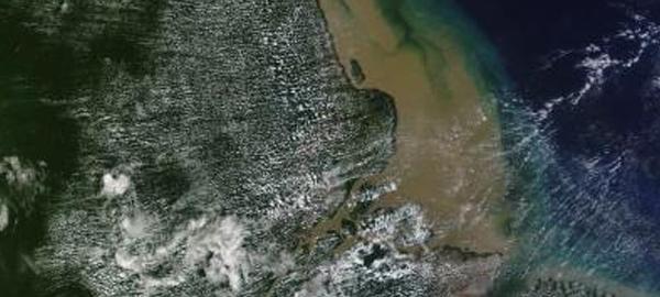 Descubren un arrecife de coral de 1.000 kilómetros en el río Amazonas