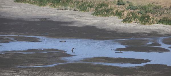 Desvelan la fecha del final del agua potable en la Tierra