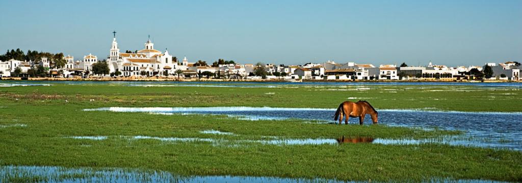 La agricultura ilegal sigue avanzando en Doñana
