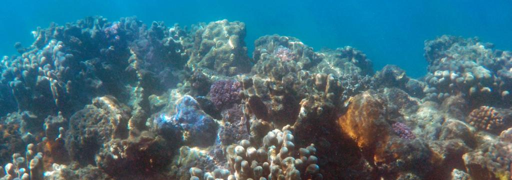 La explotación de los recursos marinos pone en peligro la biodiversidad