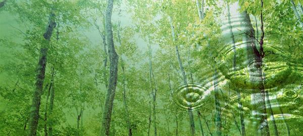 La importancia de los árboles en el medio ambiente