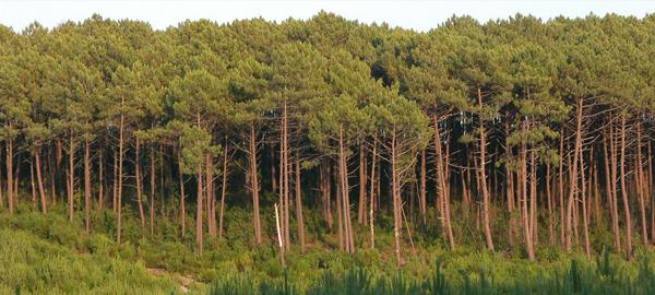 Se prevé la disminución de los incendios forestales por las abundantes lluvias en primavera