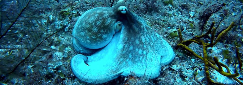 Un estudio revela que el cambio climático favorece el aumento de cefalópodos