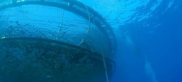 Compañías chilenas fomentan la acuicultura en zonas expuestas