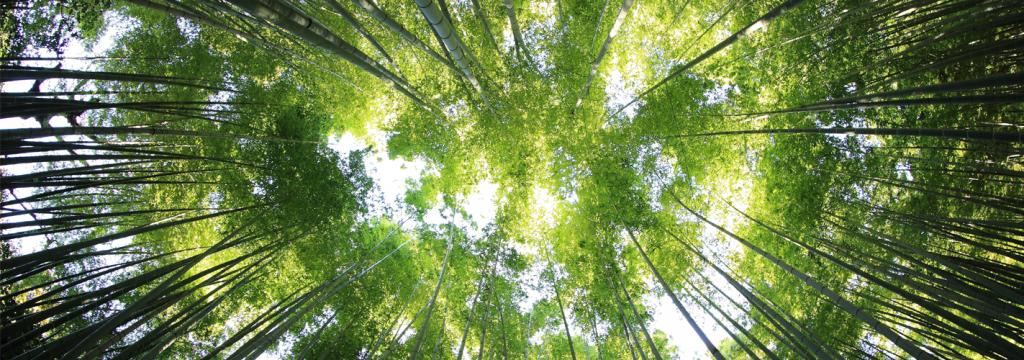 El Día Mundial del Medio Ambiente se celebra con un sinfín de actividades