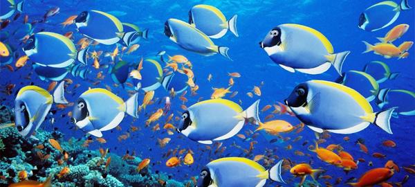 Ecologistas advierten del descenso de especies marinas