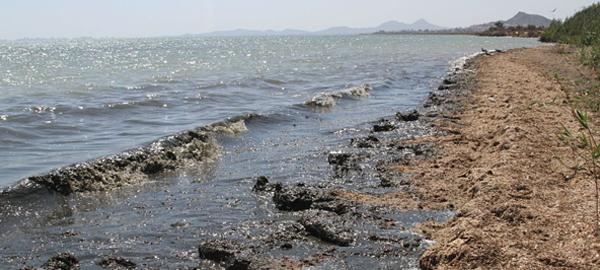 Ecologistas en Acción sacan la bandera negra para el Mar Menor