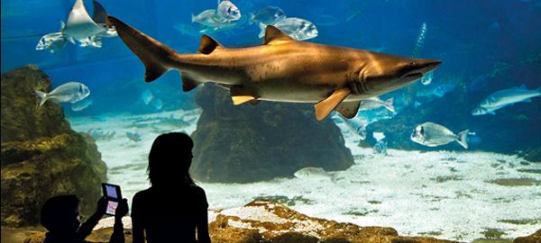 L'Aquàrium de Barcelona ahorra hasta un 70% en energía apostando por la tecnología led