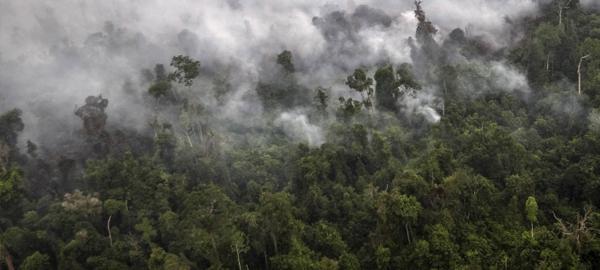 Las emisiones de CO2 por incendios forestales subieron un 12% en 2015