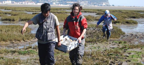 Restauran las marismas para recuperar el nivel del mar