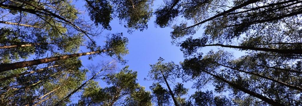 Bosques sostenibles para combatir el cambio climático