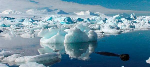 Descubren químicos que dañan la fauna de la Antártida