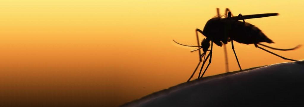 El cambio climático podría traer la malaria o el zika a España