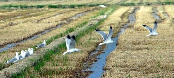 El equilibrio ecológico del Ebro está en peligro