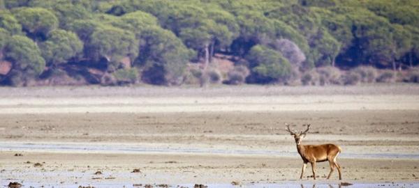 España cumple únicamente 1 de las 37 medidas para preservar la biodiversidad