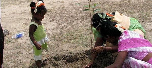 India bate récord al plantar casi 50 millones de árboles en 24 horas
