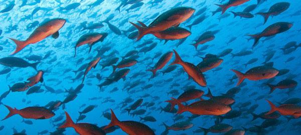 La acidificación de los océanos afecta a la reproducción de los peces