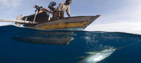 La humanidad sigue saqueando los océanos