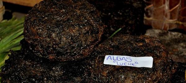 La importancia de las algas en la seguridad alimentaria