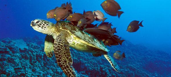 Nuevos y preocupantes datos sobre los grandes ecosistemas marinos
