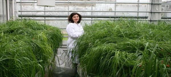 Nuevas investigaciones para alcanzar cultivos adaptables