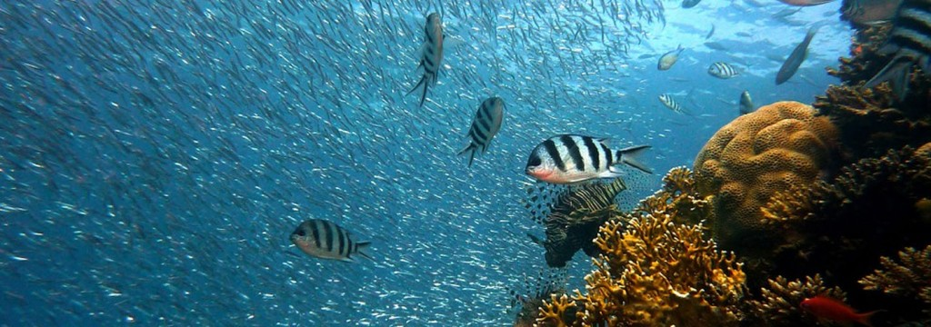 Chile albergará el parque marino más grande de América