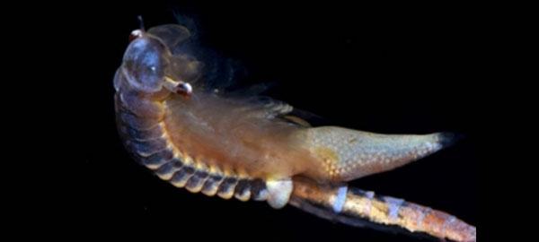 Descubren nueve especies jurásicas en charcas del interior peninsular