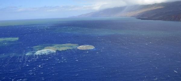 Espectaculares imágenes de una ballena en la isla de El Hierro