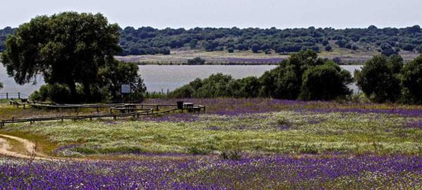 El acuífero de Doñana está en alerta por la explotación de los recursos subterráneos para el regadío