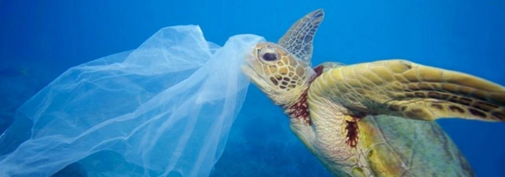 Ocho millones de toneladas de plástico acaban cada año en los océanos