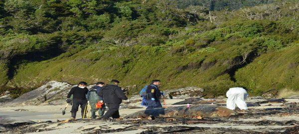 Se encuentran crías de delfín entre los cetáceos varados en la costa chilena