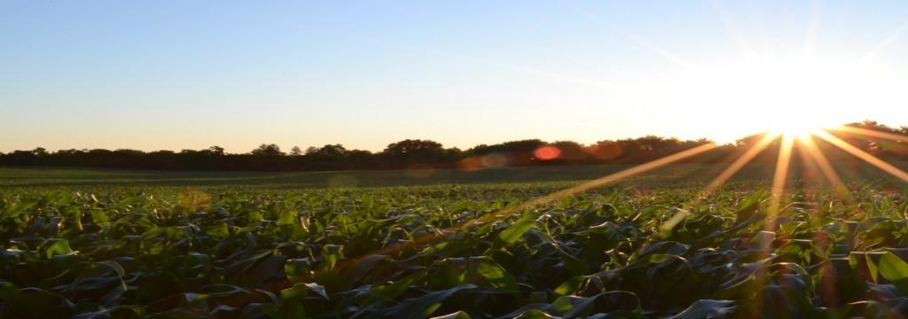 Los cultivos de Centroamérica ya sienten el impacto del cambio climático