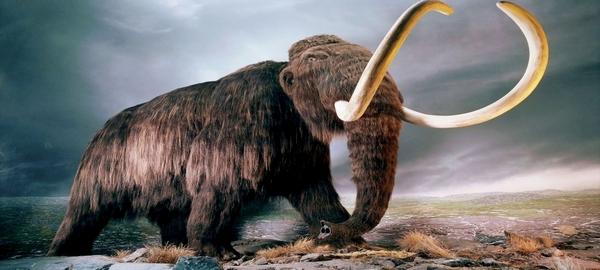 Los mamuts lanudos de Alaska desparacieron por la sed