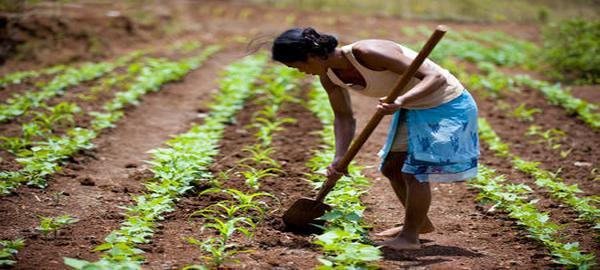 Agricultura 'inteligente' para superar la sequía en Madagascar