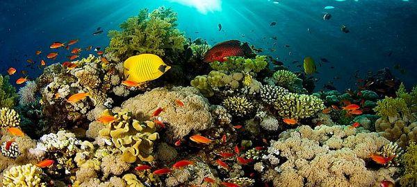 Elevada mortandad en el arrecife de coral del Banco Oriental del Jardín de Flores