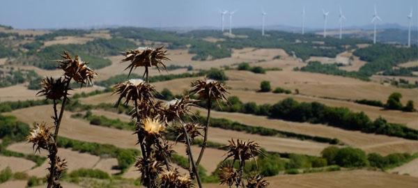 Árboles y cultivos agonizan por la extrema sequía y el calor