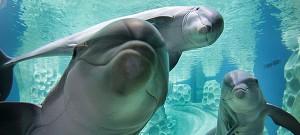 Delfines en cautiverio: la ilusión de una sonrisa