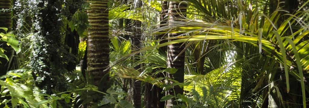 'El Niño' y el calentamiento global llevan al extremo a los bosques amazónicos