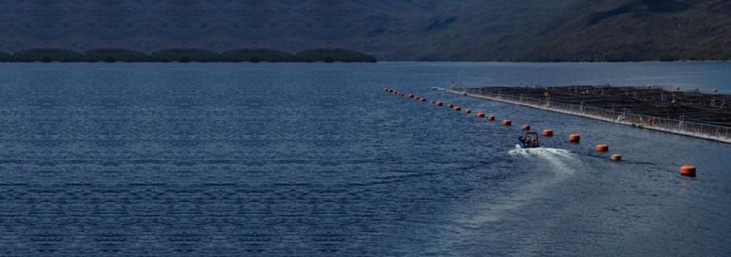 El calentamiento oceánico compromete la seguridad de los alimentos