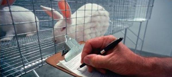 En España se utilizan más de 800 mil animales al año para la investigación científica