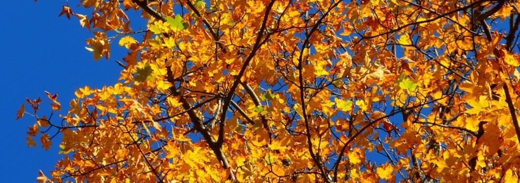 Este otoño será el más caluroso en 50 años