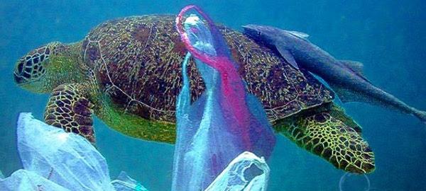¿Ha disminuido el impacto ambiental de las bolsas de plástico?