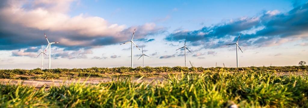 La doble cara de las energías renovables: buenas para el planeta, malas para la fauna