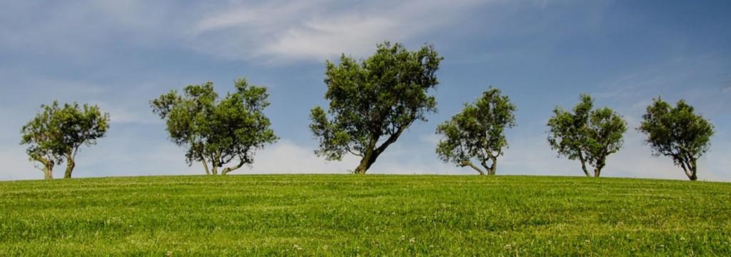 Las 10 claves para salvar al medio ambiente mundial