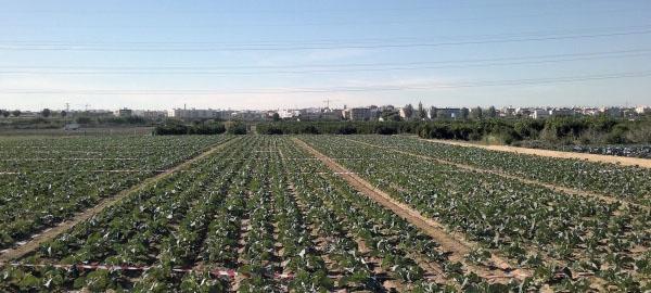 alerta-por-la-contaminacion-aguas-subterraneas-debido-a-un-fertilizante