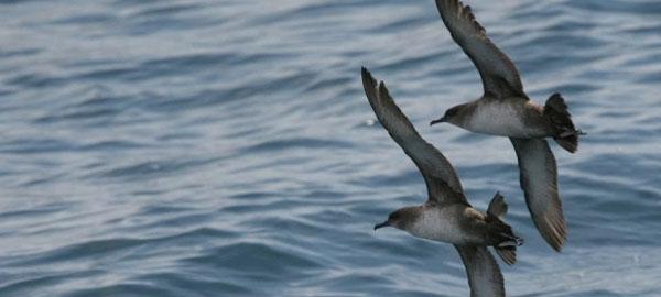 BirdLife propone una nueva Área Marina Protegida en el Atlántico