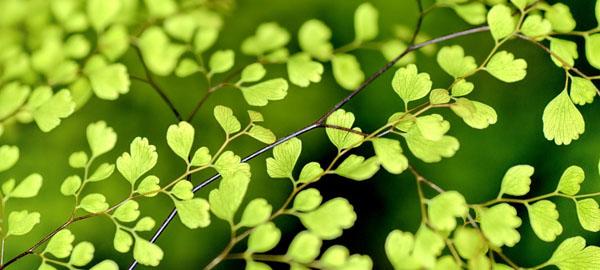 Descubren los mecanismos que ayudan a las plantas a sobrevivir a las sequías