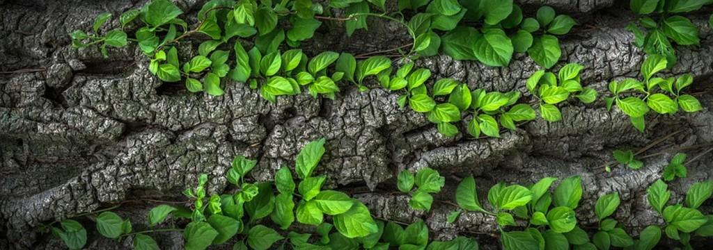 """El """"enverdecimiento"""" de la Tierra, la respuesta del planeta al cambio climático"""