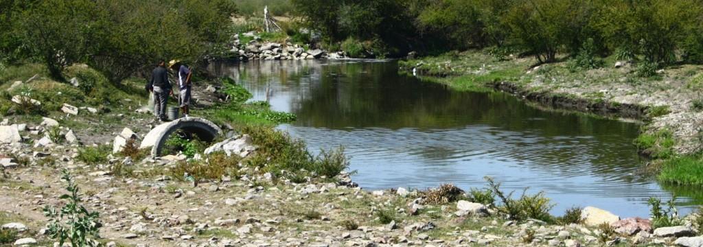 El estado actual de los ríos amenaza la vida de sus especies nativas